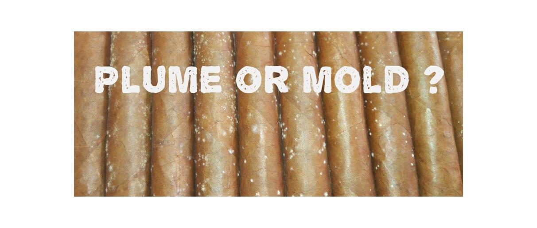 4 Ways to Identify a Cigar That Has Gone Bad